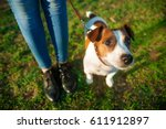 Stock photo the dog on a leash at the feet of the mistress looks up on the green grass 611912897