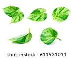 Small photo of Ivy arum leaf isolated on a white background.