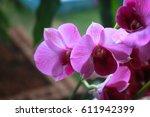 cattleya orchid flower  | Shutterstock . vector #611942399