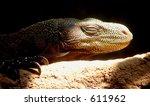 komodo dragon looking into sun | Shutterstock . vector #611962