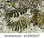 background. tropics. exotic... | Shutterstock . vector #612003227