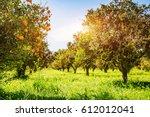 impressive view of green garden....   Shutterstock . vector #612012041