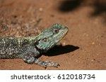 african lizard sunbathing | Shutterstock . vector #612018734