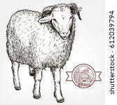 sketch of sheep drawn by hand... | Shutterstock .eps vector #612039794