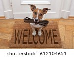 jack russell dog  waiting a the ... | Shutterstock . vector #612104651