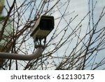 white cctv installed on the tree | Shutterstock . vector #612130175