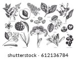 vector floral collection.... | Shutterstock .eps vector #612136784
