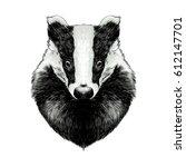head badger symmetric  sketch... | Shutterstock .eps vector #612147701