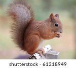 squirrel  eating the nut | Shutterstock . vector #61218949