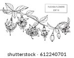 drawing flowers. vector... | Shutterstock .eps vector #612240701