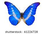 Stock photo morpho helena butterfly close up isolated on white morpho rhetenor 61226728