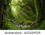tropical jungle   Shutterstock . vector #612334529
