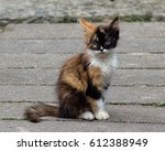 Stock photo street kitten 612388949
