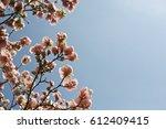 romantic template. pink flowers ... | Shutterstock . vector #612409415