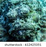 stonefish portrait | Shutterstock . vector #612425351