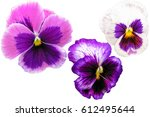 Pansy Flowers Set Isolated On...