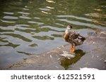 Duck Twenty Two  A Smart Littl...