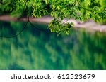 scenery of the green lakeshore | Shutterstock . vector #612523679