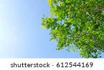 green leaf under blue sky | Shutterstock . vector #612544169