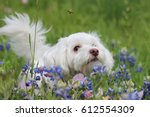 A Dog Amongst Wildflowers...