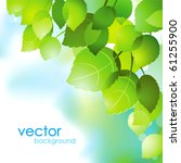 abstract vector  green leaves... | Shutterstock .eps vector #61255900