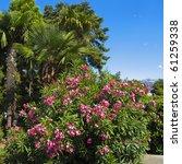Tropical Landscape   Pink...