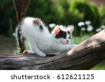 Stock photo small white kitten scratching tree branch in the garden 612621125