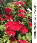 red flowers | Shutterstock . vector #612749984