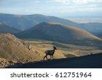 goat in colorado   ... | Shutterstock . vector #612751964