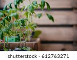 green seedlings in spring | Shutterstock . vector #612763271