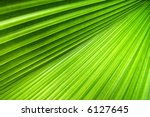 Palm Leaf With A Strong...