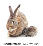 Rabbit And A Small Bunny On A...