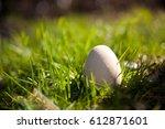 Egg On The Grass. Easter Egg...