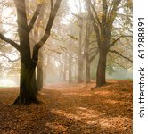 autumn at the morning  park | Shutterstock . vector #61288891