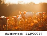 Happy Piglets Playing In Leave...