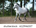 white latvian breed horse... | Shutterstock . vector #612946337