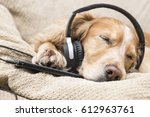 Dog Listening To Music Mobile...