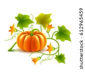 Growing Pumpkin Plant Isolated...
