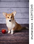 corgi puppy with a red apple | Shutterstock . vector #612972245