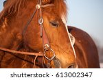 Western Horse With Bridle Clos...