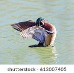 wood duck male or carolina duck ... | Shutterstock . vector #613007405