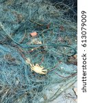 Small photo of Crab in blue trawl of fisherman.