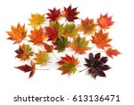 autumn maple leaves | Shutterstock . vector #613136471