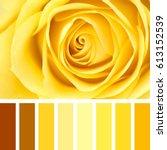 closeup of a delicate yellow... | Shutterstock . vector #613152539