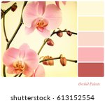 pink orchids filtered to look... | Shutterstock . vector #613152554