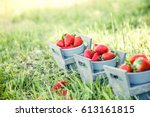 fresh fruit. strawberries in... | Shutterstock . vector #613161815