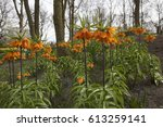 Orange Spring Flowers With...