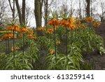 Orange Spring Flowers With...