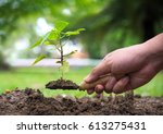 tree growth. planting a tree.... | Shutterstock . vector #613275431