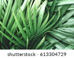 Palms Leaves